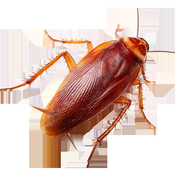 средство от тараканов Алушта